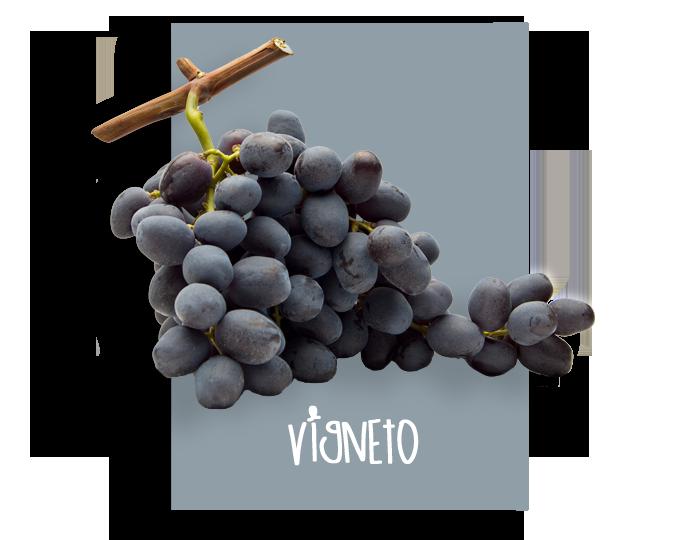 02_vigneto
