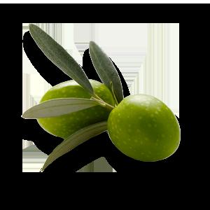 olive300