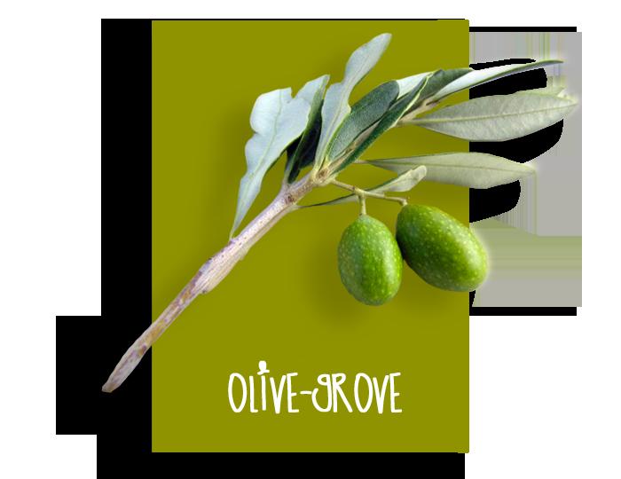 01_olivegrove