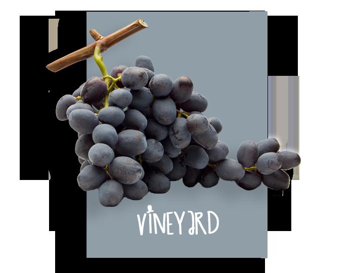 02_vineyard